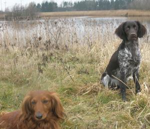 Hund_13-04-01_Maika_og_Nalah.jpg